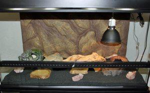 Террариум для пятнистого эублефара - леопардового геккона