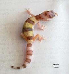 малыш проекта Aurora (W&Y Bell albino)