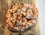 Ball python (Королевский питон)