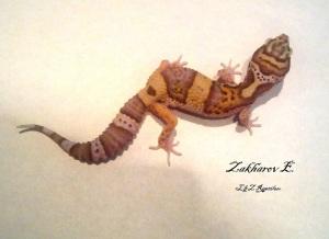 Леопардовый геккон RADAR