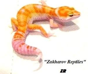Леопардовый геккон W&Y Tremper albino