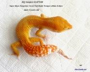 Леопардовый геккон Санглоу РАПТОР