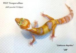 Эублефар W&Y Tremper albino