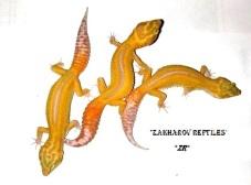 Пятнистый эублефар Tangerine Stripe Tremper Albino