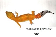 Леопардовый геккон Super Hypo Tangerine Carrot Tail