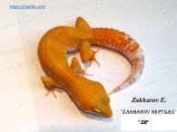 Леопардовый геккон Sunglow TA
