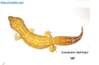 Леопардовый геккон Тремпер альбино